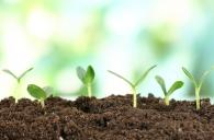Визначення посівних якостей насіння станом на 15 січня 2019 року