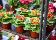 Зміни законодавства щодо ввезення та вивезення насіння і садивного матеріалу на митну територію України