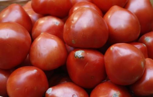 У вантажі свіжих томатів з Польщі виявлено карантинний організм
