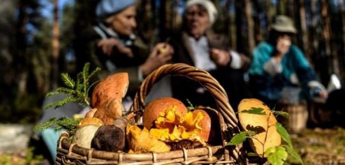 Де не варто збирати гриби або найнебезпечніші зони тихого полювання!