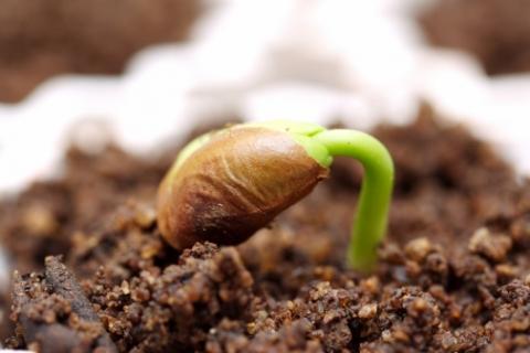 Картинки по запросу посівні якості насіння