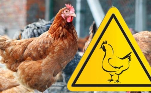 Оперативна інформація щодо ліквідації грипу птиці в Немирівському районі станом на 24 січня 2019 року