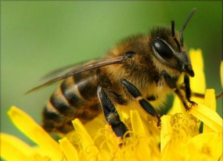 Попередження отруєння медоносних бджіл