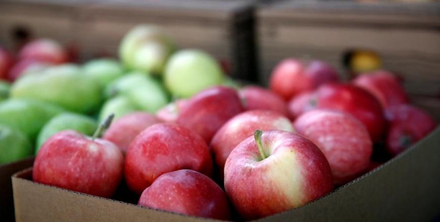Щодо експорту пробних партій яблук до Республіки Індія