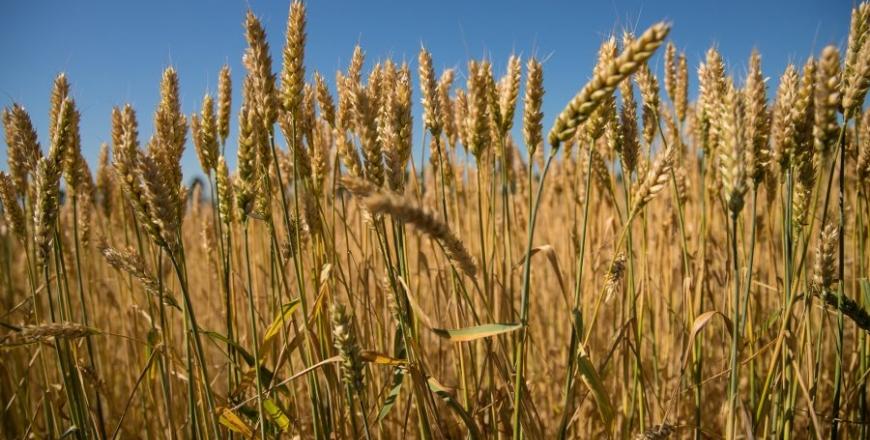 Визначення посівних якостей насіння cтаном на 21 серпня 2019 року