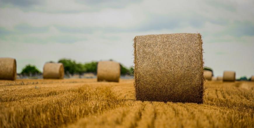 Прогноз фітосанітарного стану та рекомендації щодо захисту сільськогосподарських рослин у господарствах Вінницької області восени 2019 року