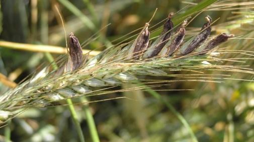 Визначення посівних якостей насіння станом на 01 жовтня 2020 року