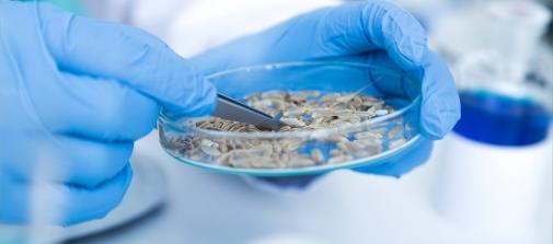 """Більше 17000 тонн насіння перевірила ДУ """"Вінницька обласна фітосанітарна лабораторія"""" у 2020 році"""