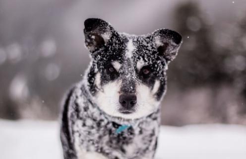 Допоможіть безпритульним тваринам пережити холод, врятуйте чотирилапе життя!