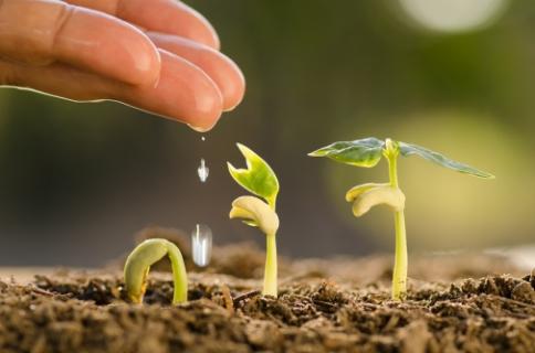 Визначення посівних якостей насіння станом на 17 грудня 2020 року