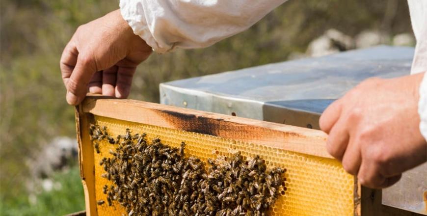 На Вінниччині фахівці Держпродспоживслужби та представники ОТГ обговорили алгоритми взаємодії пасічників та аграріїв для попередження отруєння бджіл