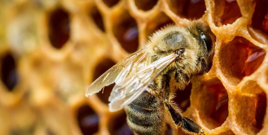 Практичні рекомендації агровиробникам та пасічникам щодо попередження випадків отруєння бджіл пестицидами