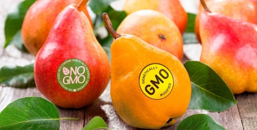 Законодавче регулювання використання ГМО в насінництві та розсадництві