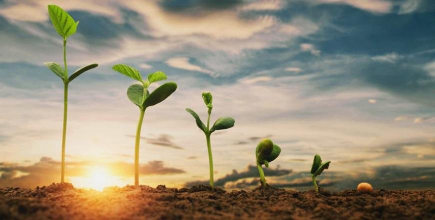 Як убезпечитися від придбання контрафактного чи фальсифікованого насіння?