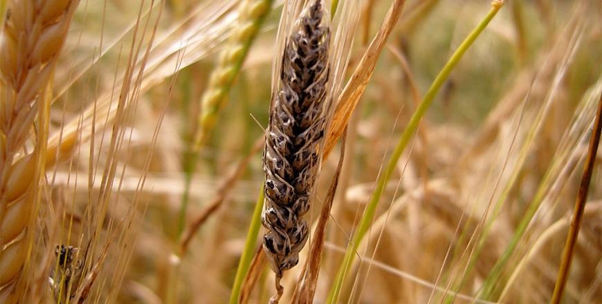 Визначення посівних якостей насіння станом на 24 вересня 2020 року